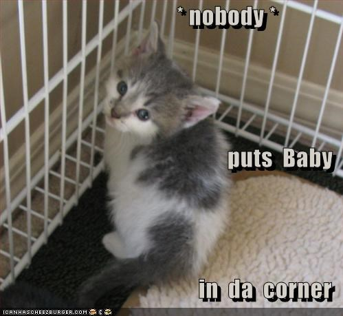 baby,cage,caption,captioned,cat,corner,do not want,kitten,nobody,puts,quote,threat