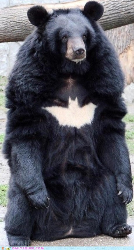 Acting Like Animals: Nananananananana Batbear!