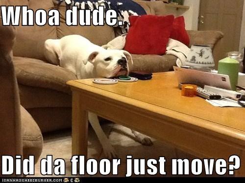 Whoa dude.  Did da floor just move?