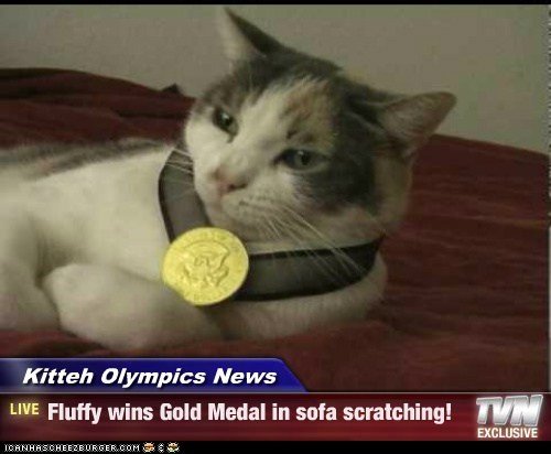 Kitteh Olympics News - Fluffy wins Gold Medal in sofa scratching!