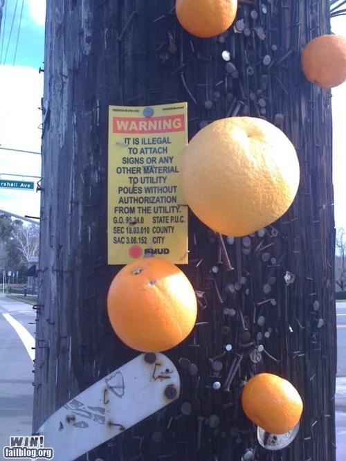 authority,fruit,lamp post,orange,rebel,sign,warning