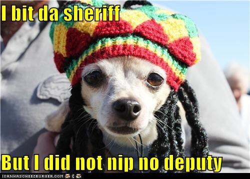 bob marley,chihuahua,dreadlocks,dreads,i shot the sheriff,Music,reggae
