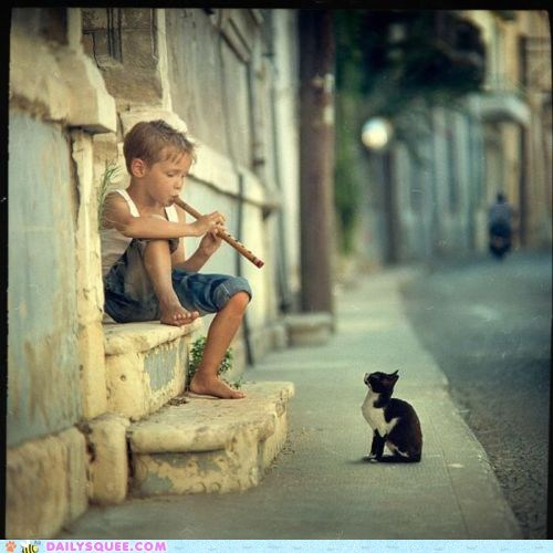acting like animals,cat,folktale,following,Hall of Fame,hamelin,kid a,kitten,pied piper,radiohead,song