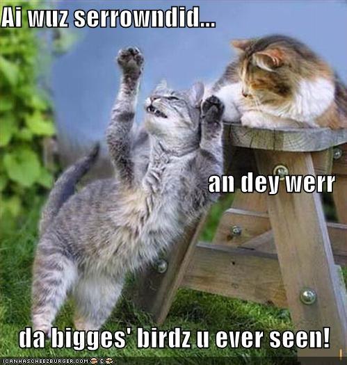 adventure,big birds,birds,cat,cool story bro,I Can Has Cheezburger,story,whoa