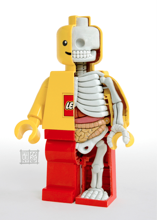 Lego Minifig Anatomy Model of the Day