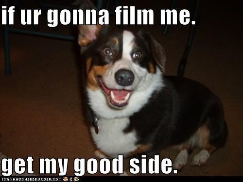 bernese mountain dog,corgi,film,good side,happy,happy dog,mixed breed,photograph,photography,smile,smiles,smiling
