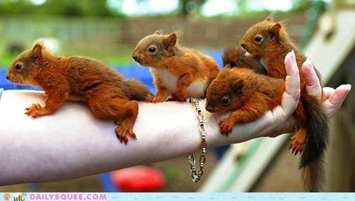 fashion,fashion statement,fur,Hall of Fame,handful,humane,squirrel,squirrels