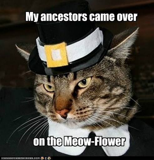 ancestors,came,caption,captioned,cat,costume,dressed up,mayflower,meow,over,pilgrim,prefix,pun,puritan,thanksgiving