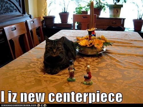 am,caption,captioned,cat,centerpiece,I,new,sitting,table,thanksgiving
