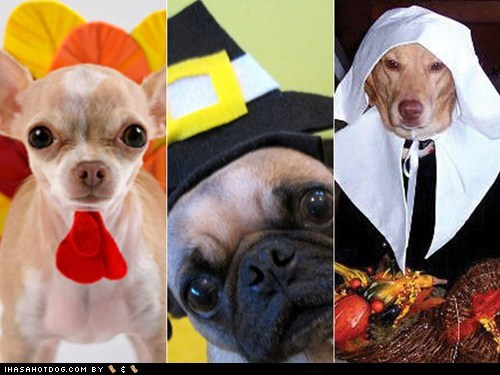 10 Costumed Dogs Celebrating Thanksgiving