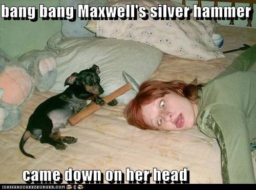 dachshund,funny face,hammer,human,maxwells-silver-hammer,the Beatles