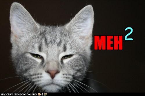 bored,boring,cat,I Can Has Cheezburger,meh,meh squared,ok
