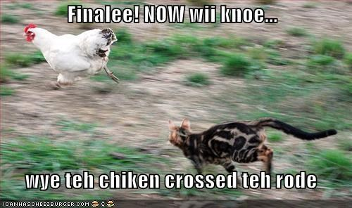 caption,captioned,cat,chase,chasing,chicken,crossed,finally,know,now,road,running,we,why