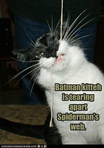 Batman kitteh is tearing apart Spiderman's web.
