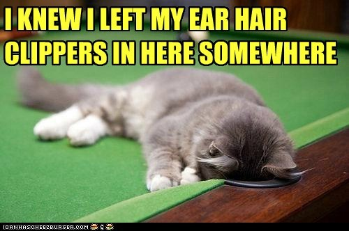 billiards,caption,captioned,cat,clippers,ear,hair,here,I,knew,left,looking,pocket,pool table,searching,somewhere,table