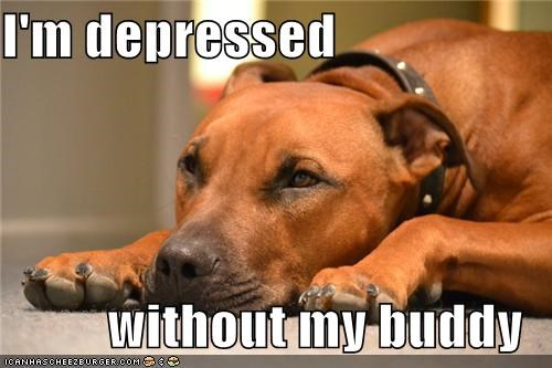 I'm depressed  without my buddy