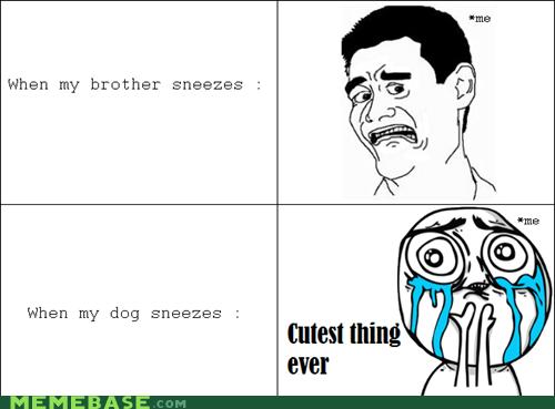 brother,cute,dogs,Rage Comics,sneeze,When Amanda Sneezes
