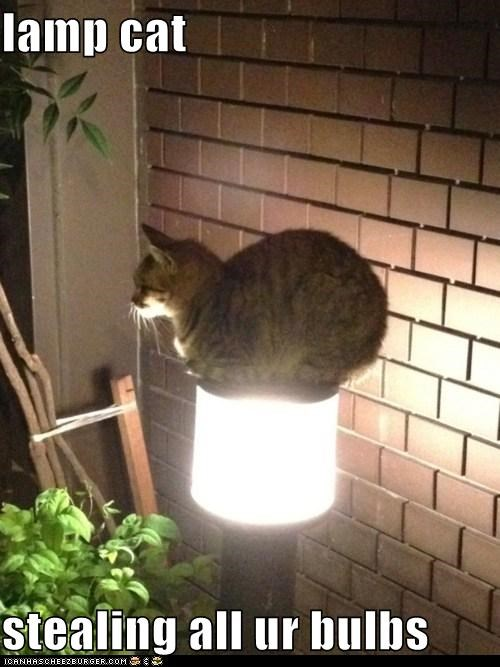 lamp cat  stealing all ur bulbs
