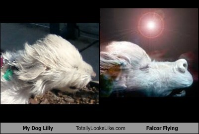 My Dog Lilly Totally Looks Like Falcor Flying