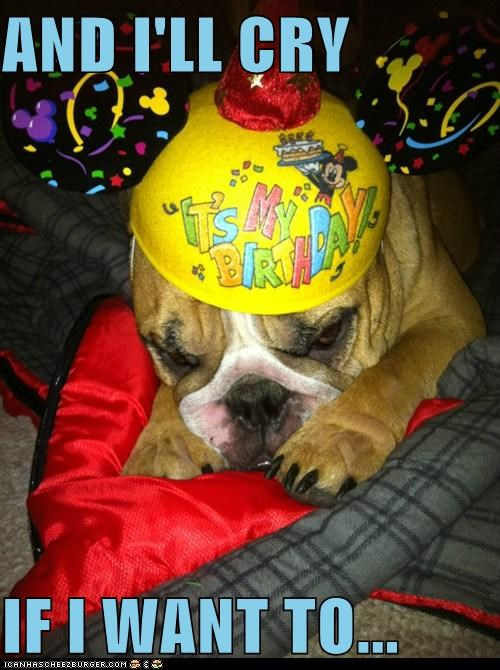 birthday,birthday hat,bulldog,cry,crying,its-my-party-and-ill-cry-if-i-want-to,party hat