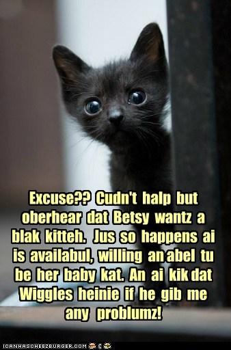 Blak baby kat for Betskand!
