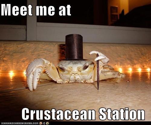 Meet me at         Crustacean Station