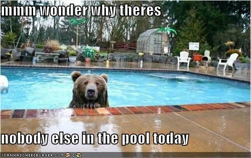 animals,bear,best of the week,Hall of Fame,huh,pool,swim,swimming