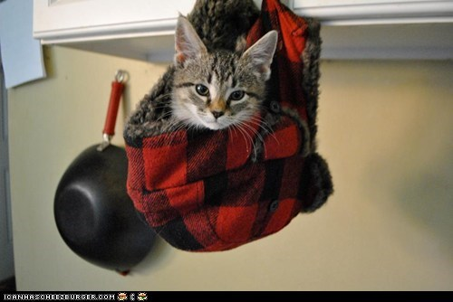 cyoot kitteh of teh day,get out of there cat,hanging,hats,the cat in the hat