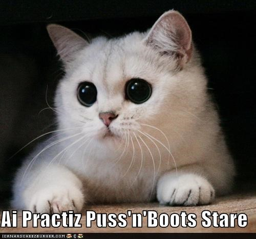Ai Practiz Puss'n'Boots Stare