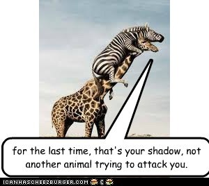 for the last time, that's your shadow, not another animal trying to attack you.