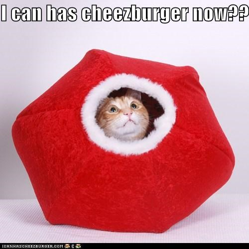 I can has cheezburger now??