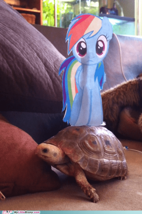 IRL rainbow dash turtle
