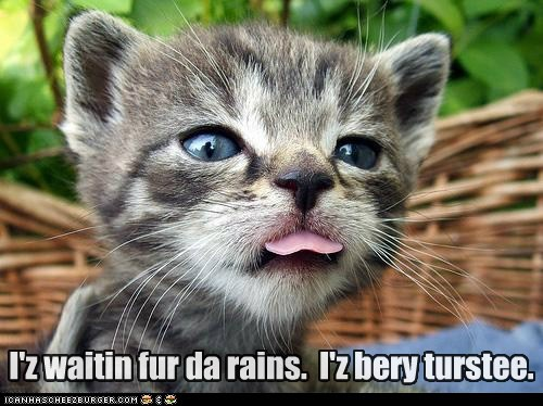 caption,captioned,cat,kitten,out,rain,sticking,stuck,thirsty,tongue,very,waiting
