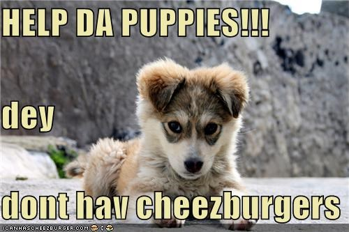 HELP DA PUPPIES!!! dey dont hav cheezburgers