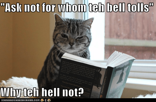 ask,bell,book,caption,captioned,cat,Command,confused,ernest hemingway,for,for whom the bell tolls,hemingway,not,novel,question,quote,reading,tolls,whom,Why Not