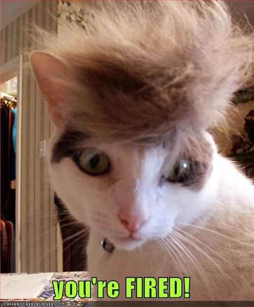 cat,donald trump,I Can Has Cheezburger,toupee,youre-fired