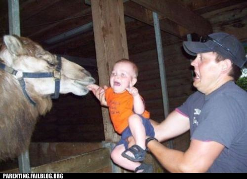 accident,animals,baby,camel,food,noms,Parenting Fail,scared