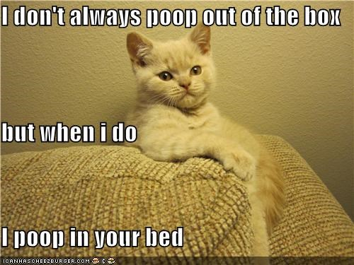 I don't always poop out of the box but when i do I poop in your bed