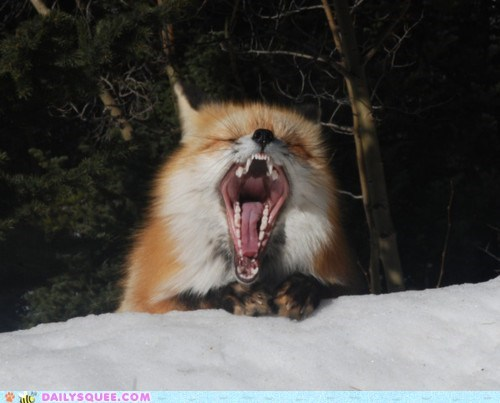 acting like animals,cold,complaining,do not want,fox,snow,unhappy,upset,wet,whining,winter