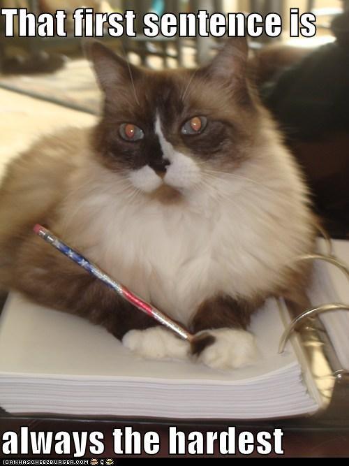 cat,essay,grammar,homework,I Can Has Cheezburger,paper,paper due,sentence,writer,writers block,writing