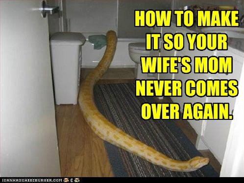 animals,bathroom,in laws,mother in law,python,snake
