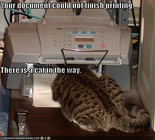 Your document could not finish printing. There is a cat in the way.