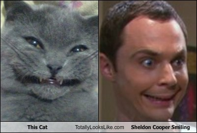 This Cat Totally Looks Like Sheldon Cooper Smiling