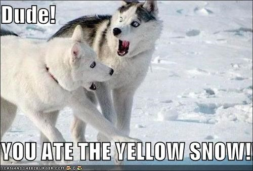 Dude!  YOU ATE THE YELLOW SNOW!!!