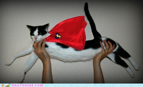 acting like animals,cape,cat,costume,do not want,dressed up,flying,superman,unhappy,upset