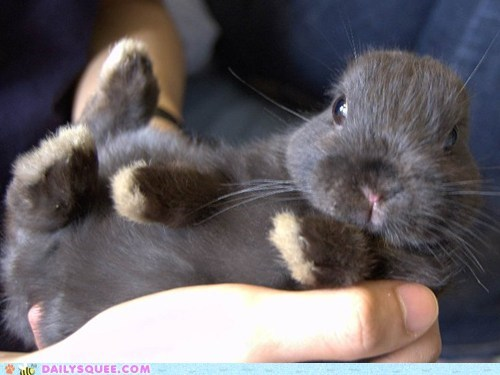 baby,bunny,hand,handheld,happy bunday,palm,presentation,rabbit,serving,tiny