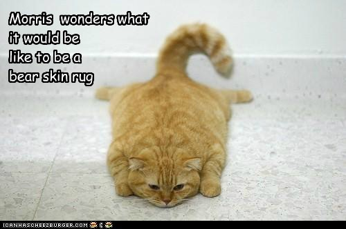 Morris  wonders what it would be like to be a bear skin rug
