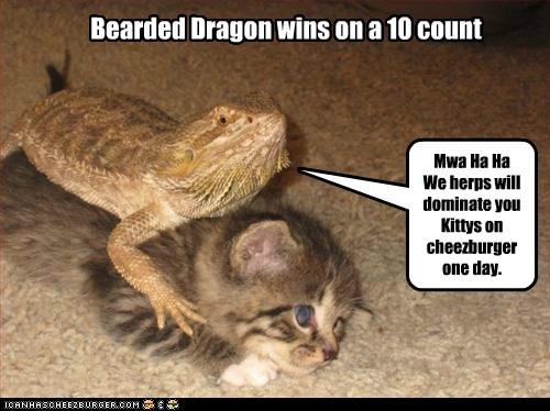 Bearded Dragon wins on a 10 count