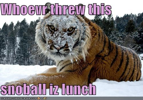 Whoevr threw this   snoball iz lunch