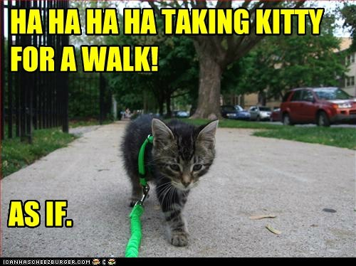 HA HA HA HA TAKING KITTY FOR A WALK!